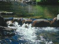 """Teslićka """"Natura vita"""" pustila u rad pogon za punjenje izvorske vode"""