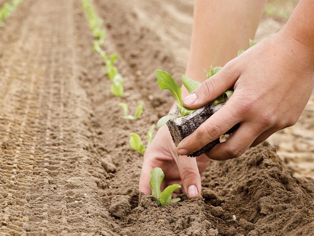 Strategija poljoprivrede i ruralnog razvoja mora biti usvojena u 2017. - BiH bi mogla ostati bez novca iz IPA fondova do 2020.