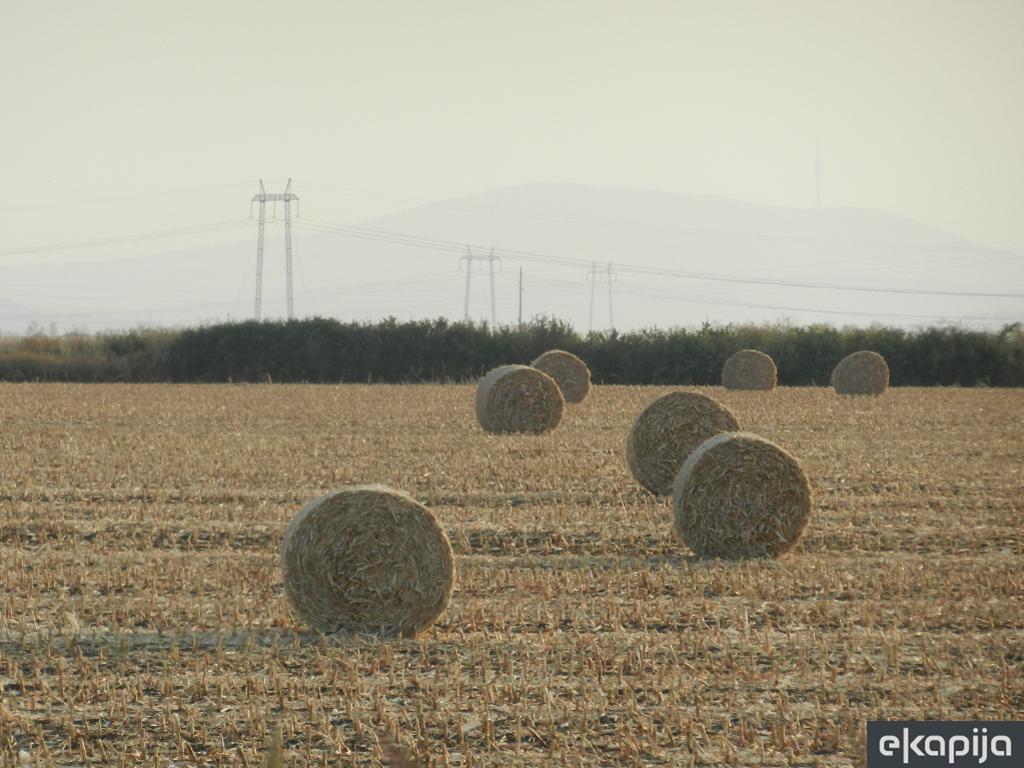Raž sve interesantnija ratarima - Manje zahtjevna od pšenice, pogodna i kao sirovina za bioelektrane