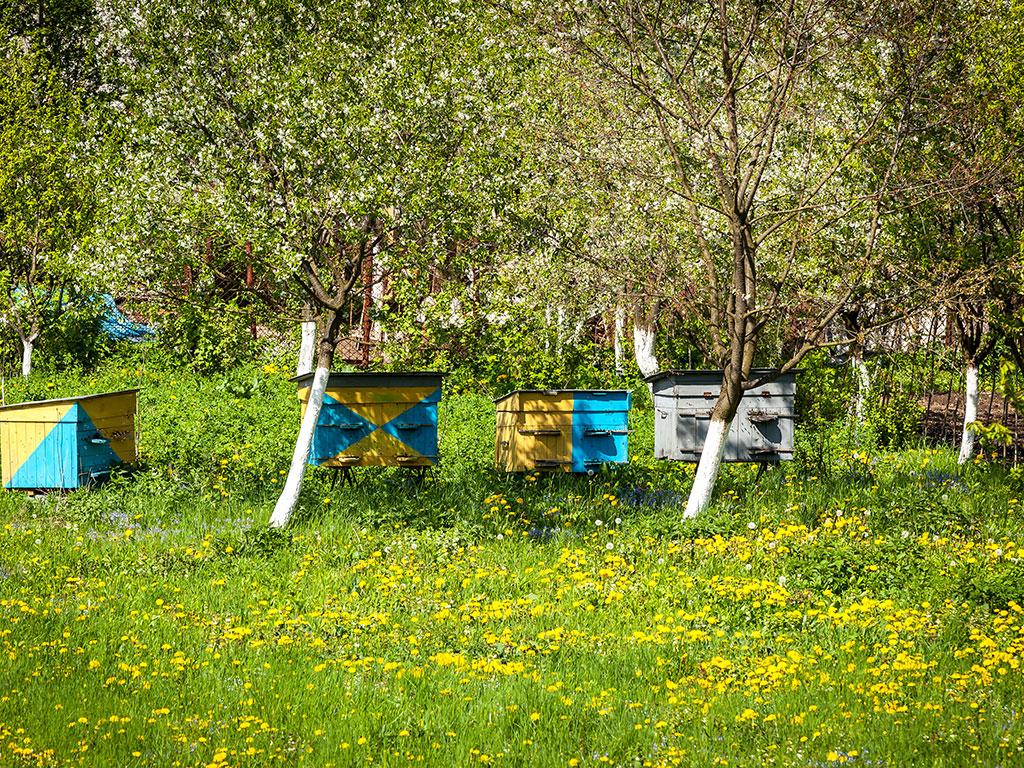 Za bolji med sa planinskih pašnjaka - EU i Vlada Švajcarske donirale opremu vrednu 25.000 EUR novovaroškim pčelarima
