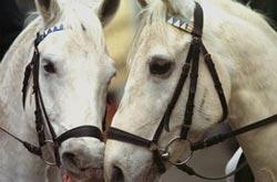Trkacki Konji