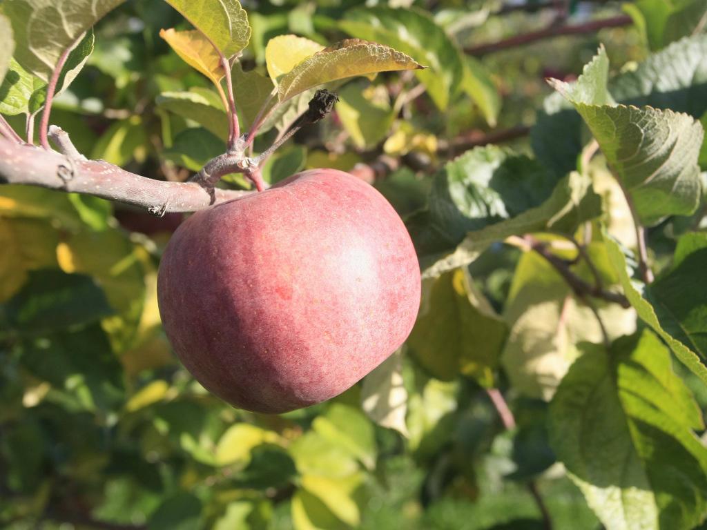 Firma iz Šamca dobila zeleno svjetlo za izvoz sadnica voća - Rusko tržište odskočna daska