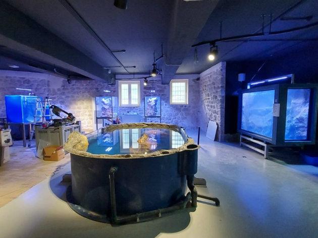 Akvarijum Boka istinska turistička atrakcija - Uskoro nove vrste, paviljoni i oporavilište za morske kornjače