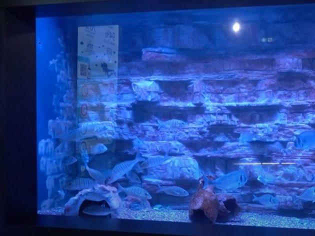 Akvarijum Boka otvorio vrata za posetioce