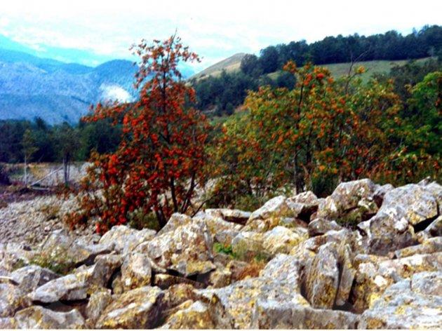 Vrelo bazalta na padinama Kopaonika - Magmatska stena silikatnog sastava ima široku primenu u mnogim granama privrede