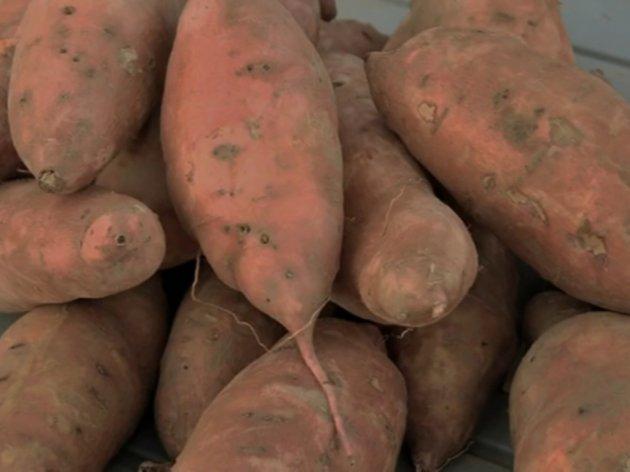 Batat, slatki krompir - Na uloženi dinar, stižu dva
