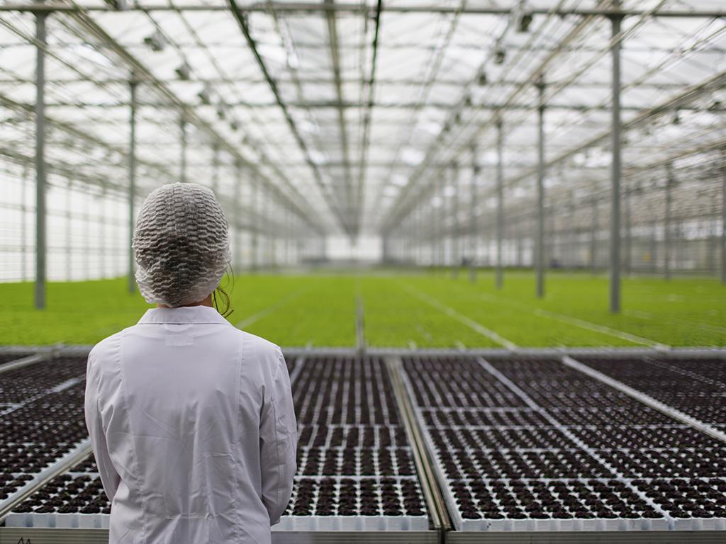 Uzorkovano voće i povrće crnogorskih proizvođača, nebezbjedno bilo 13 uzoraka - Višak pesticida zbog neznanja