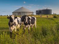 Al Dahrina biogasna postrojenja proizvodiće energiju i za druge korisnike