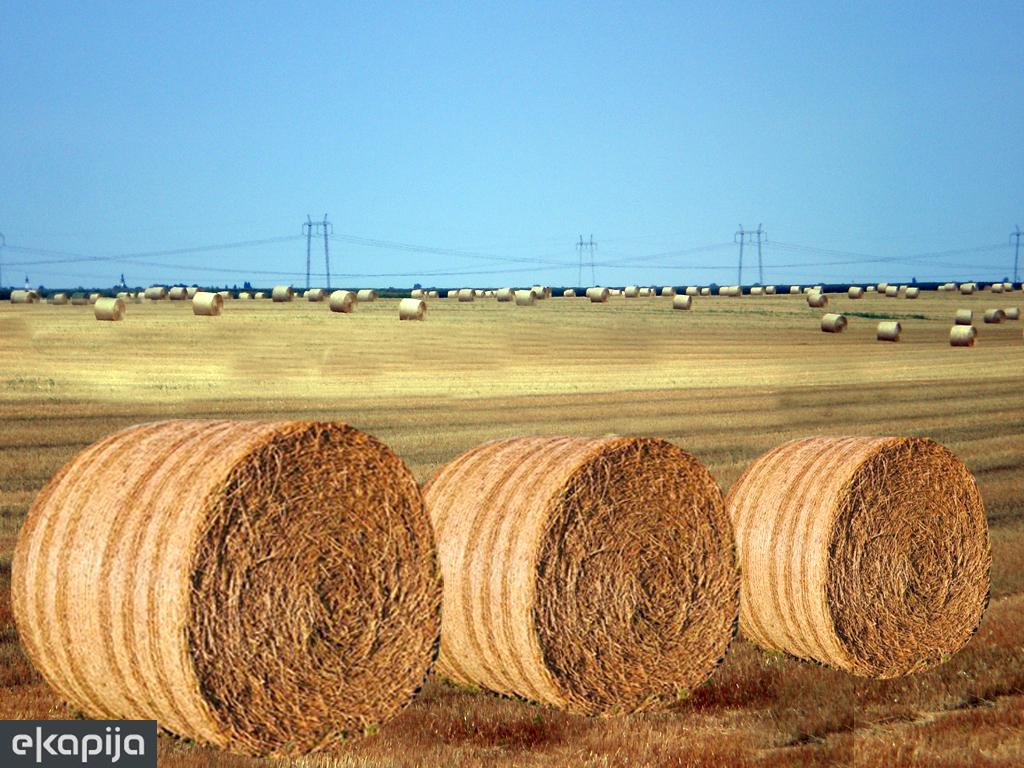 Biomasa je veliki neiskorišćeni potencijal Srbije - Obnovljivi izvori energije dobra investiciona prilika