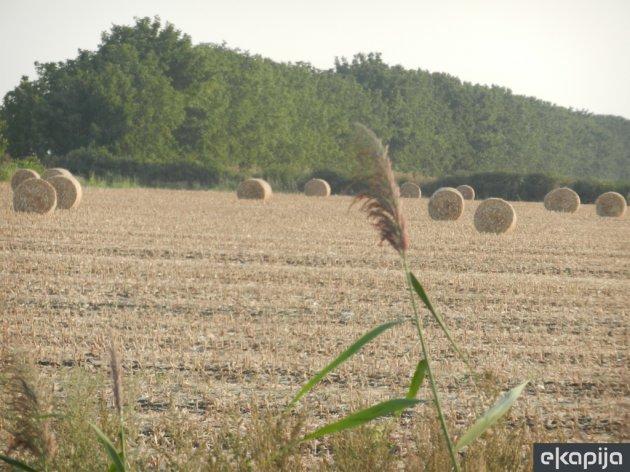 Porez na poljoprivredno zemljište u Prokuplju simboličnih 13 dinara godišnje - Podsticaj za poljoprivredu