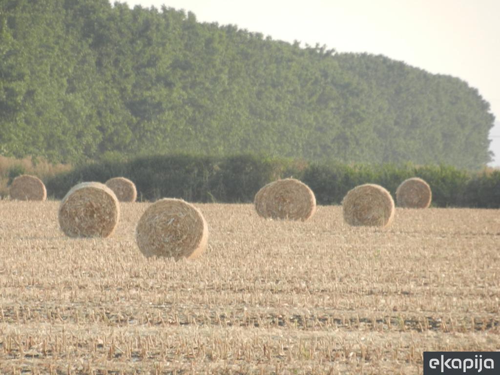 Srbija daje besplatno zemljište za uzgoj biljaka za biomasu - Toplane u 15 gradova prelaze na alternativna goriva