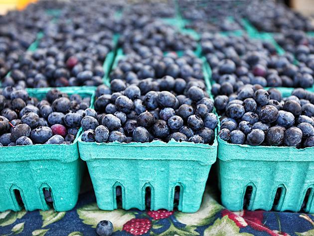 U Šumadiji raste interesovanje za uzgoj borovnice - Stabilna cena i šansa na evropskom tržištu privukle voćare