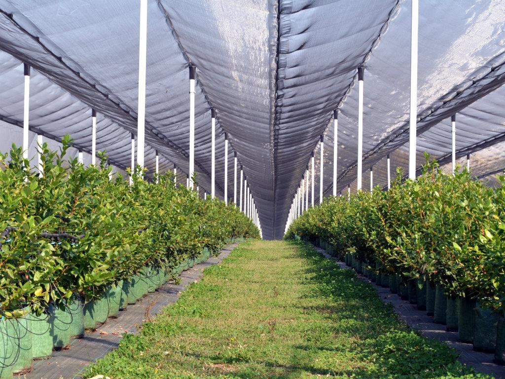 Brestovik, mjesto na kojem uzgajivači borovnice mogu da pronađu sve za zasnivanje modernog zasada (FOTO)