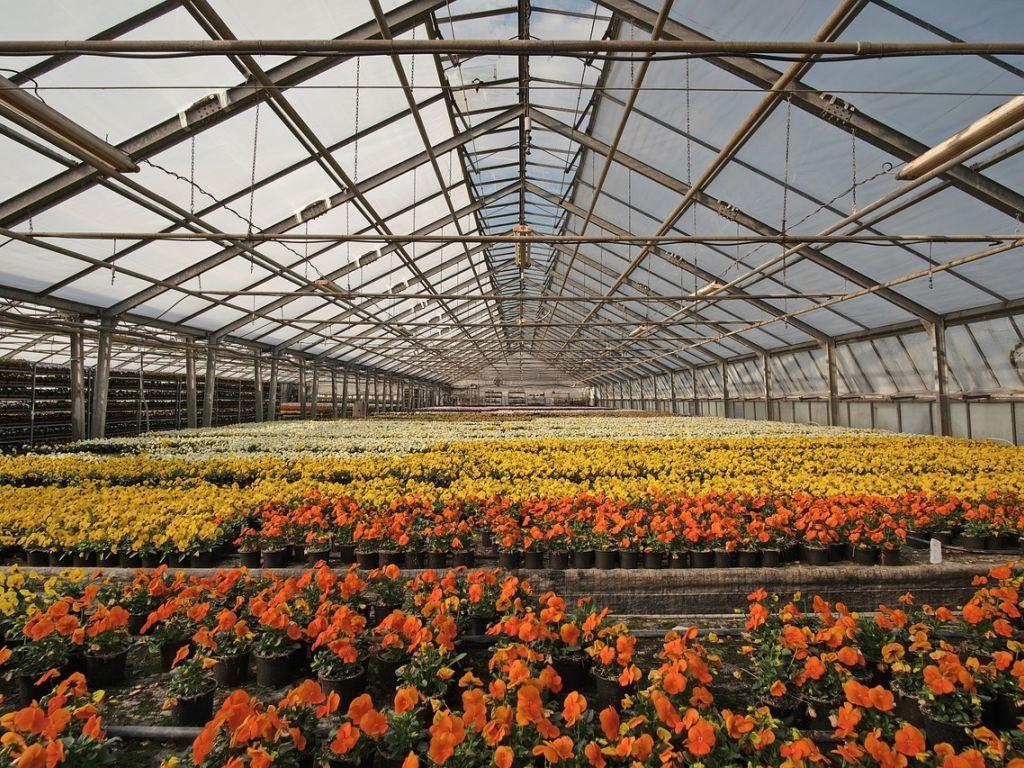 """U epidemiji """"procvetao"""" izvoz cveća - Proizvođači iz rasinskog okruga među najuspešnijima u čitavoj zemlji"""