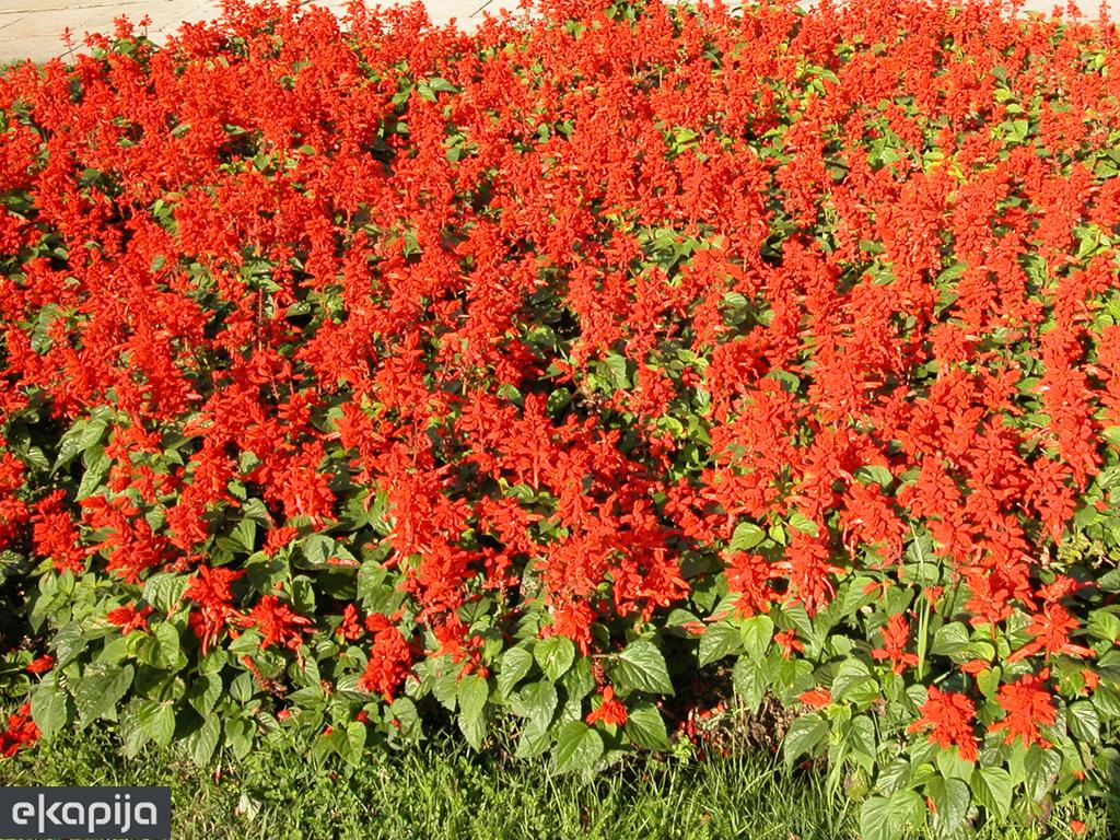 Deveti Beogradski festival cveća 21. i 22. septembra