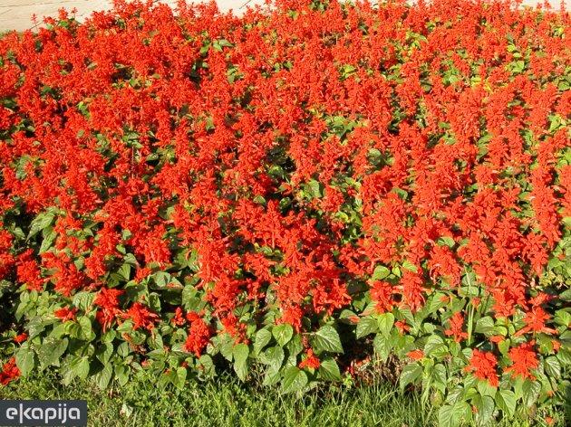 Festival cvijeća od 31. maja do 2. juna u Banjaluci