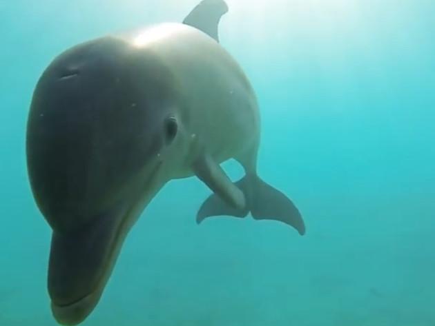 Delfini imaju osobine slične ljudskim, radoznali su i društveni
