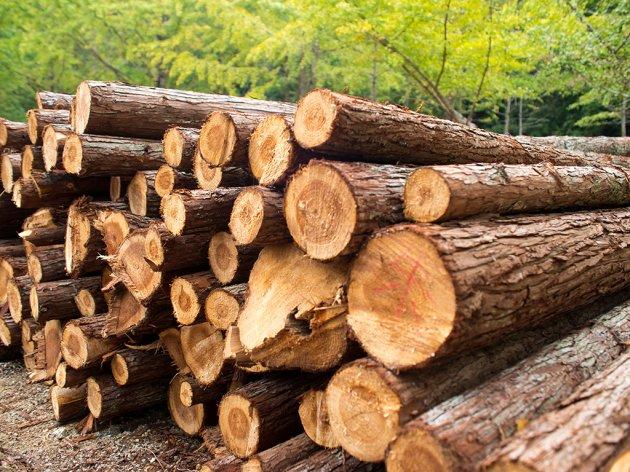 Interesovanje za kupovinu drva veće nego lani - Cijena od 35 do 40 EUR za metar