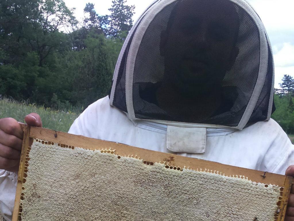 Saveti iz Pčelarstva Popaj za sve koji žele da uđu u ovaj posao - Šta sve donosi zaradu, osim meda?