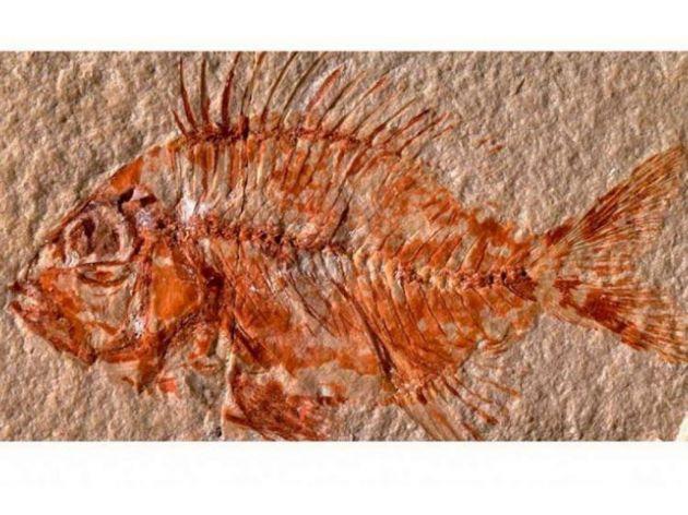 U Meksiku pronađen fosil ribe iz doba dinosaura
