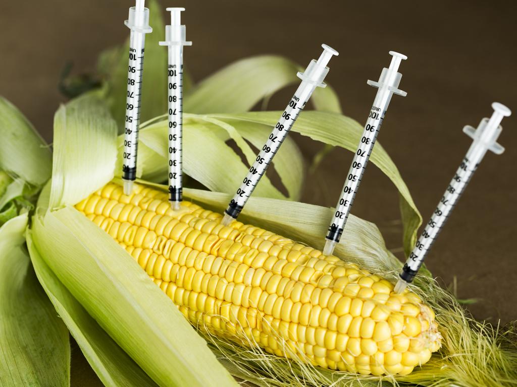 Konvencionalna poljoprivreda šansa Srbije na svetskom tržištu - Zarada se krije u njivama bez GMO