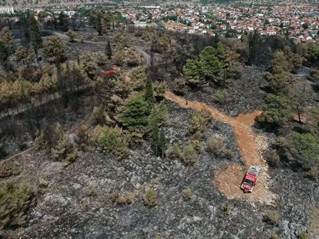 Požar ozbiljno spržio ekosistem Gorice, uništena kompletna vegetacija - Izletište proglasiti zaštićenim područjem