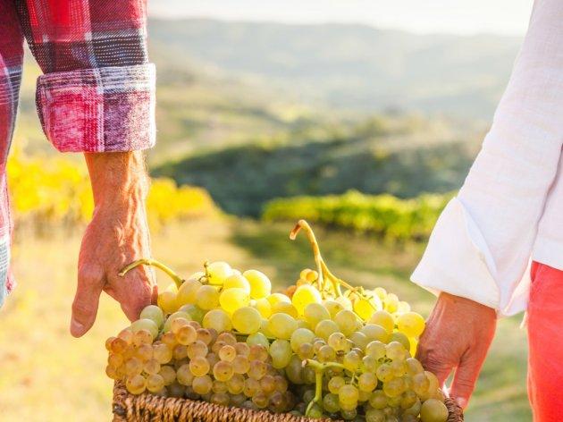 Vlada usvojila uredbu o 53 milijardi dinara subvencija poljoprivredi u 2021. godini - Više novca za vinarstvo, agroturizam i destilerije