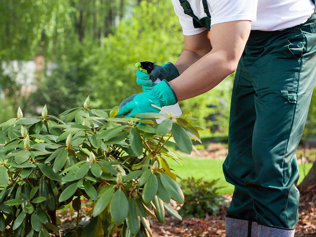 (BIH) Donijet Pravilnik o fitosanitarnom certifikatu i fitosanitarnom certifikatu za reeksport