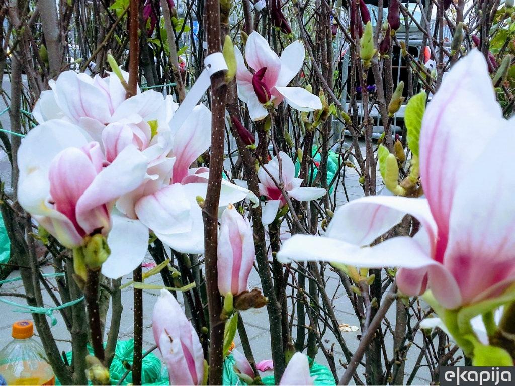 Međunarodni sajam hortikulture od 20. do 23. maja na Beogradskom sajmu