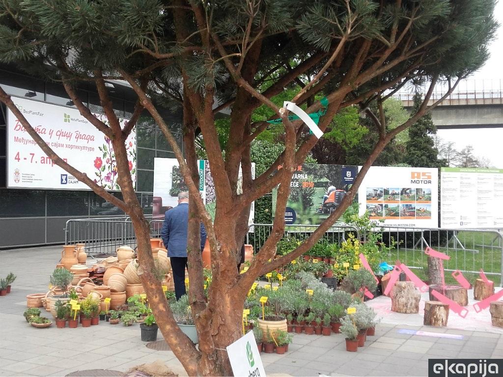Više od 100 izlagača na Međunarodnom sajmu hortikulture - Dobre ideje za uređenje balkona, dvorišta i vrtova (FOTO)