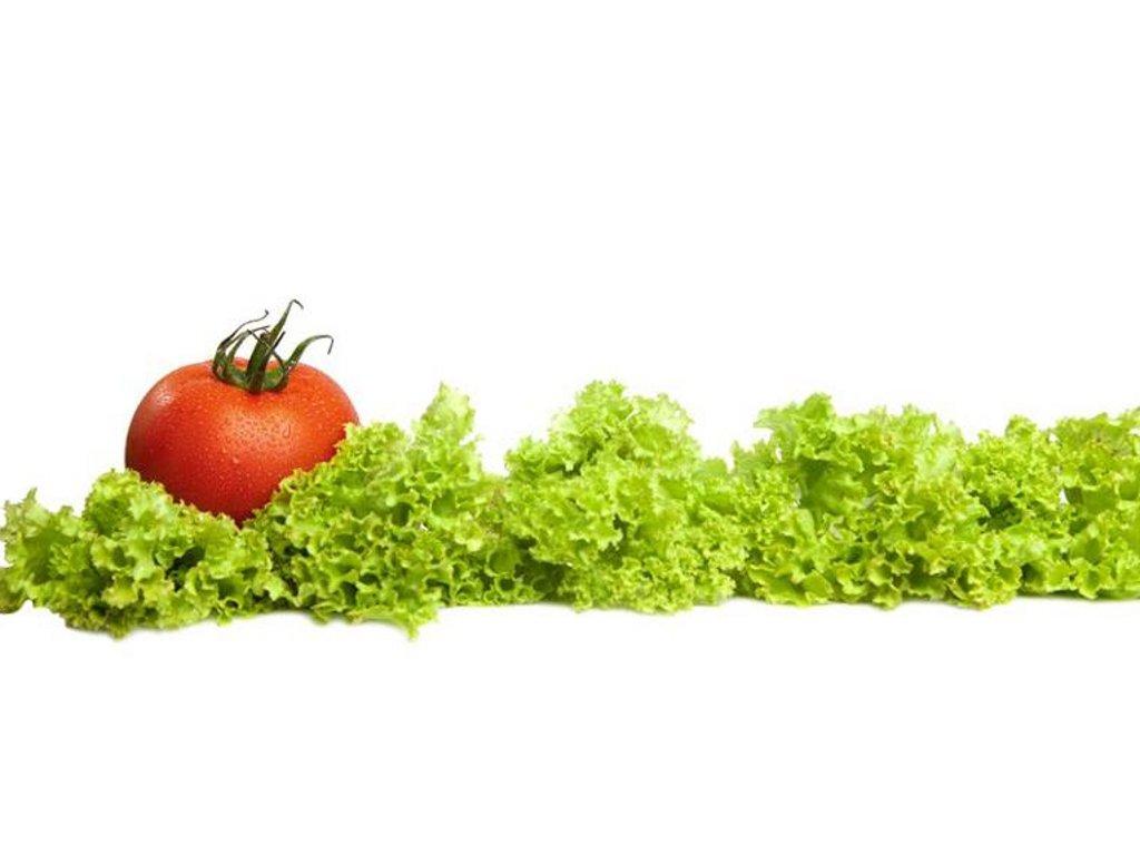 """Kad moda na trpezi diktira modu u plastenicima - """"Iceberg Salat Centar"""" jedini u Srbiji proizvodi Iceberg salatu"""