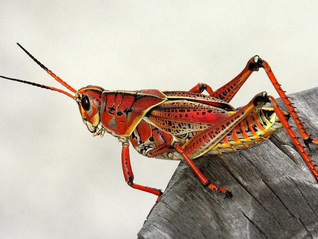 Insekti kao proteini budućnosti - Nova proizvodna linija bečke kompanije Zirp Insects