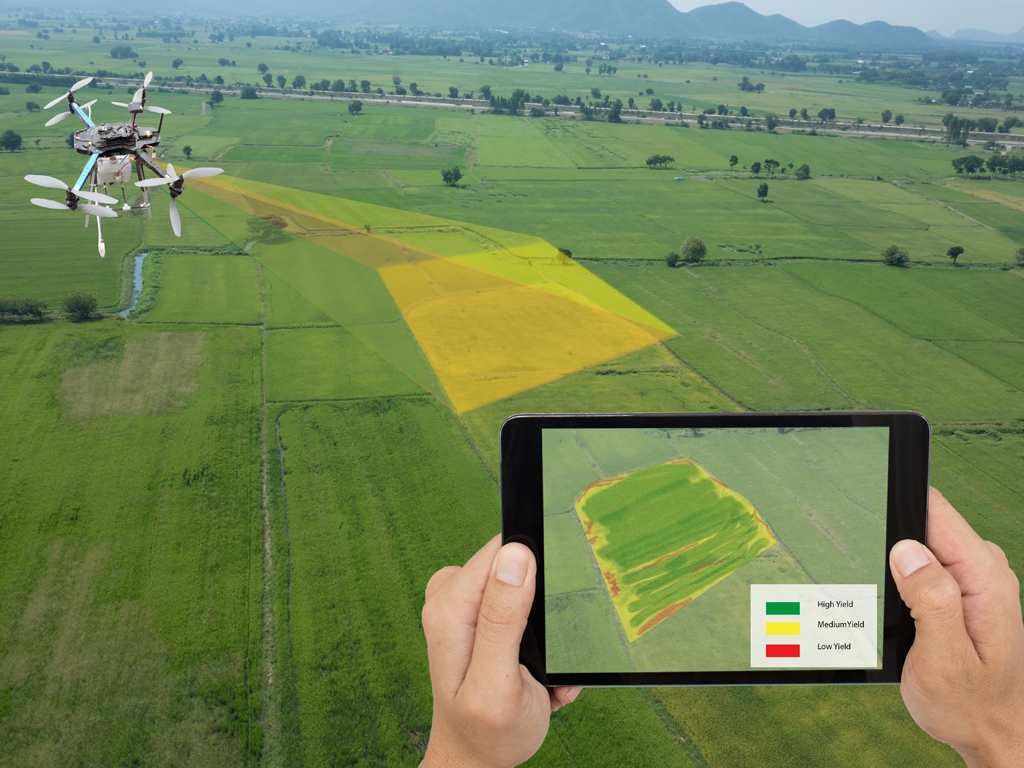 Istraživači sa Građevinskog i Matematičkog fakulteta razvijaju veštačku inteligenciju za bolje prinose u poljoprivredi