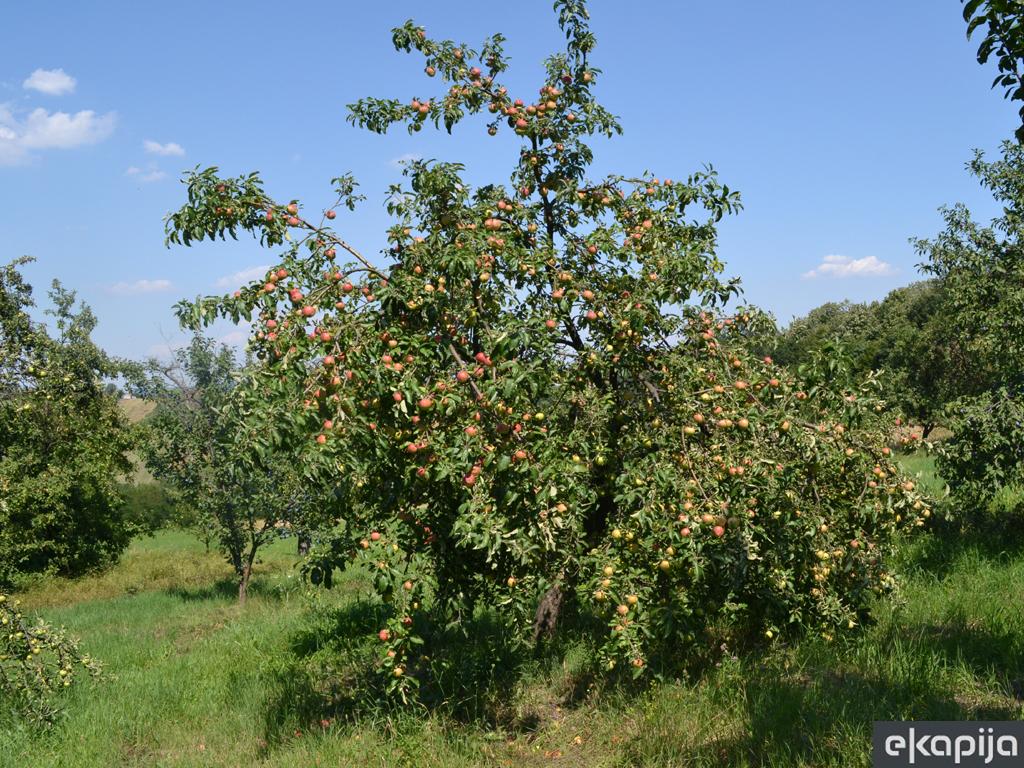 Koji su ključni faktori za uspešnu organsku proizvodnju voća?