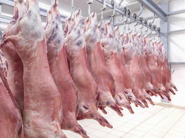 Klanica ovčijeg i jagnjećeg mesa gradiće se u Kniću - Tek slede dogovori o načinu obezbeđivanja novca