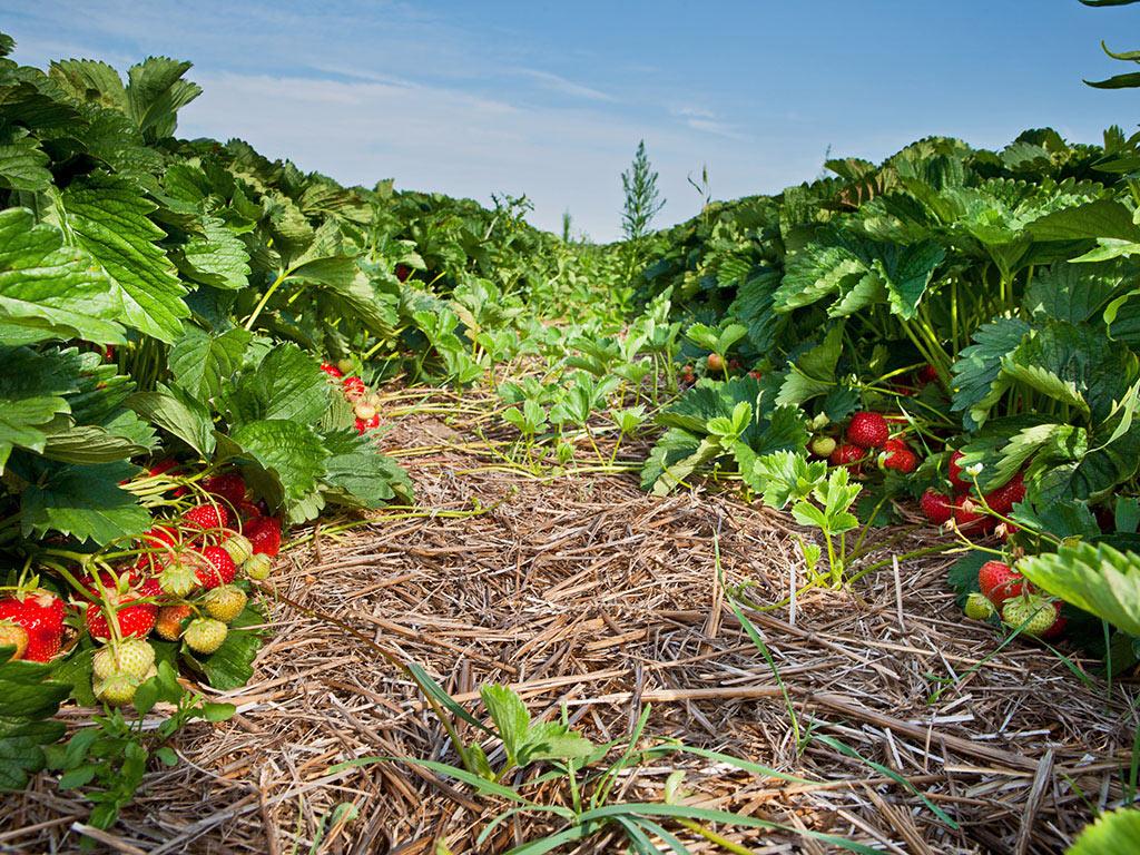 Za podizanje i modernizaciju voćnjaka bespovratna podrška do 50% investicije