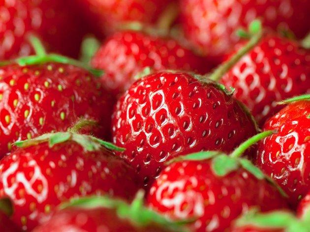 Jagode iz Lozovika spremne za rusko tržište - Za avgust planirano novih 80.000 sadnica