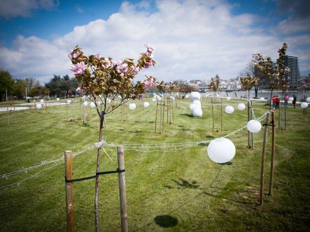 Park der Japanischen Blütenkirschen