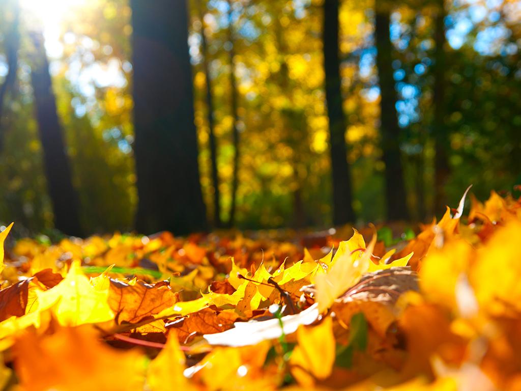 Godišnja doba utiču na pamćenje - Kratkoročna memorija najbolja u jesen