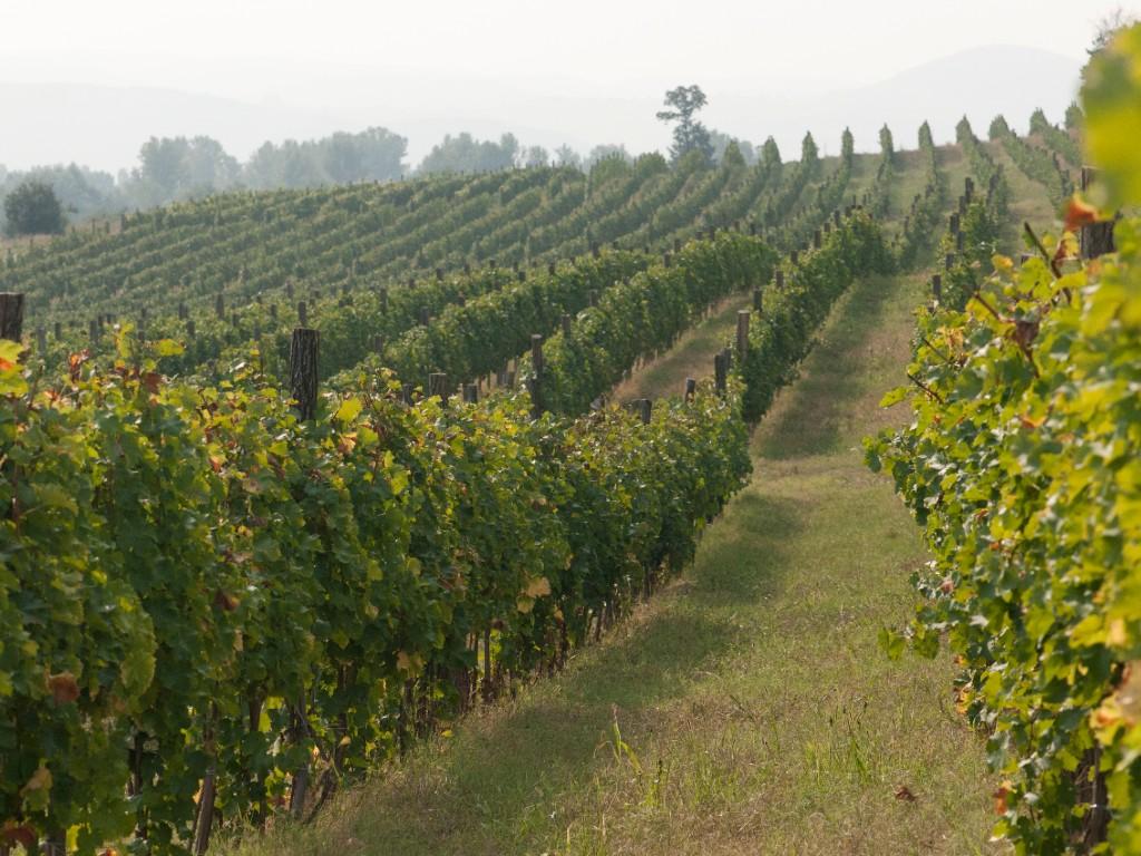 """Vinariju Jović posećuju ljudi iz domaćih i stranih poslovnih i diplomatskih krugova, a vino od višnje """"Višnjica"""" traženo je i u Evropi (FOTO)"""