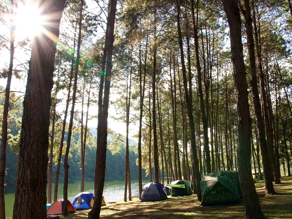 U planu novih 60 hektara šume u Beogradu