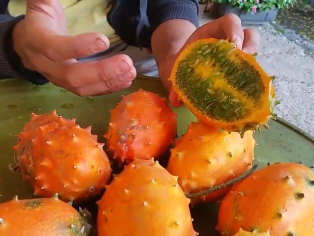 Kivano uspijeva i u Semberiji - Jednostavan uzgoj vitaminski bogatog voća