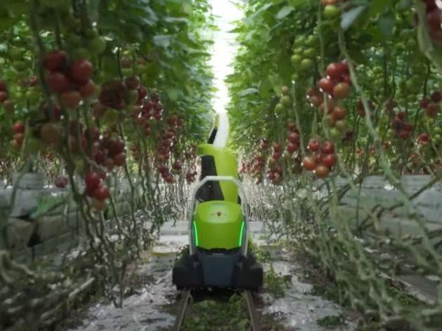 Predstavljen Kompano - Prvi robot na svijetu za uklanjanje listova paradajza (VIDEO)