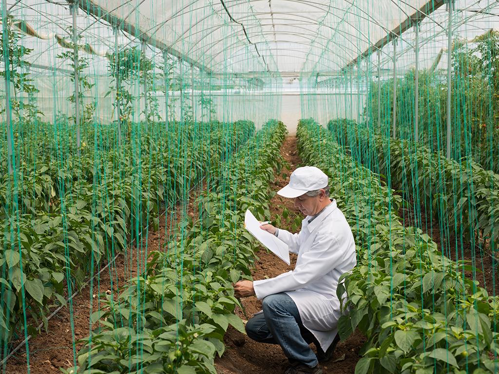 Ministarstvo poljoprivrede planira izradu baze za organsku proizvodnju