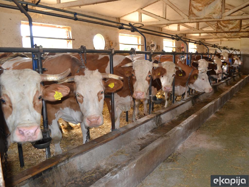 Šta donosi plan o globalnom smanjenju antibiotika na farmama do 2025. godine