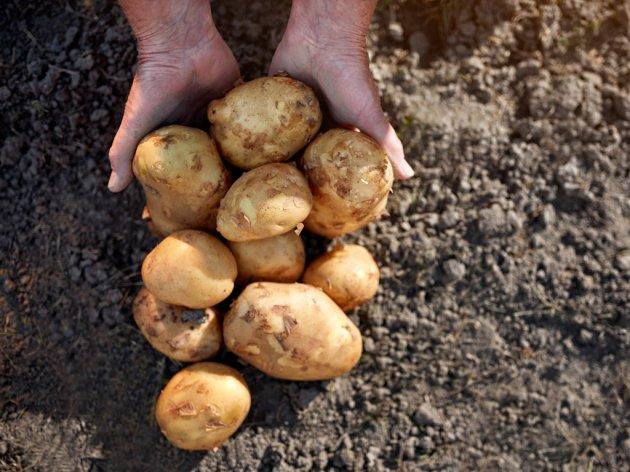 Obećana jača pomoć revitalizaciji Centra za unapređenje poljoprivede na Sokocu - U planu proizvodnja sjemenskog krompira