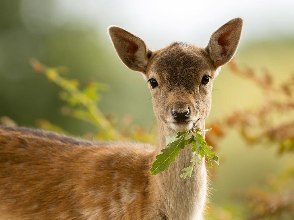 Vojvodina finansira razvoj lovstva sa više od 25 miliona dinara