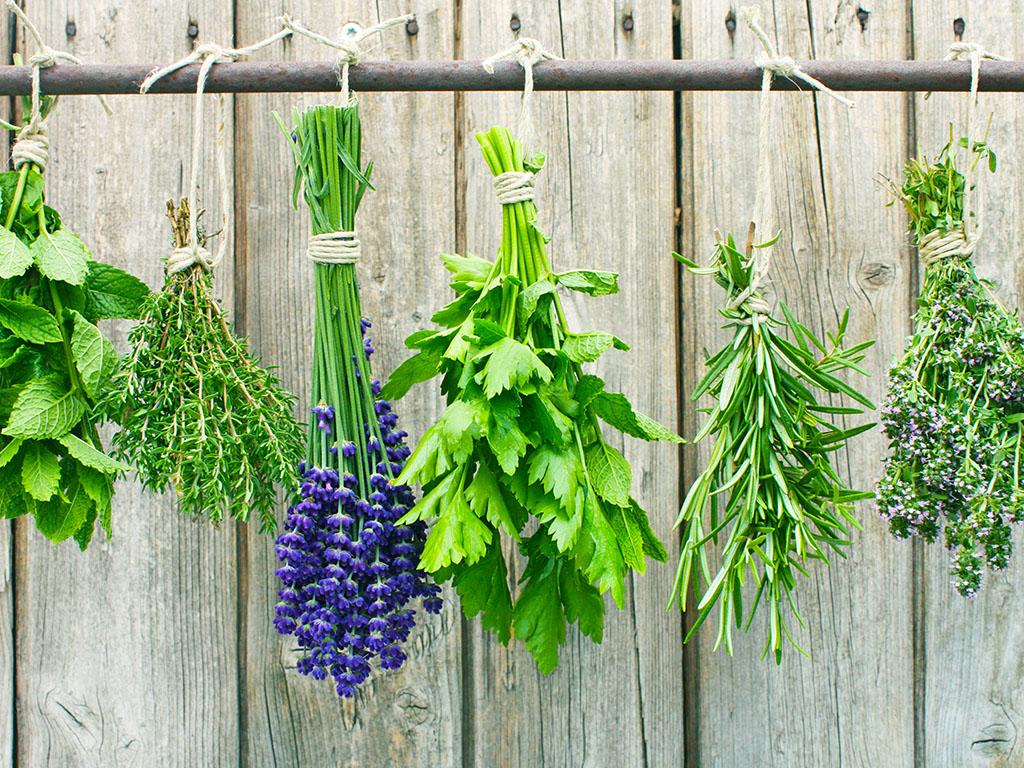 Uzgoj ljekovitog bilja može biti unosan posao - Šansa za razvoj pojedinačnih proizvodnji u seoskim domaćinstvima na sjeveru Crne Gore