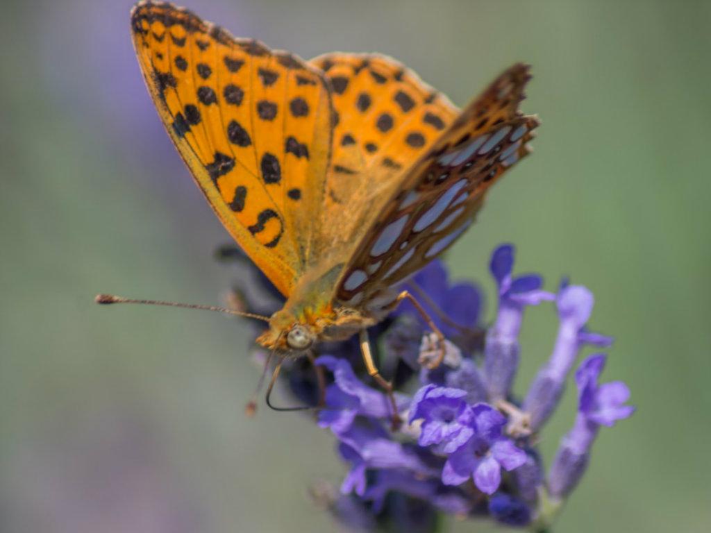 Kuća leptira, unosan posao iz Češke sada je i franšiza