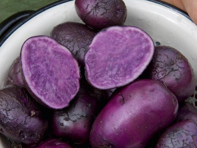 Ljubičasti krompir zanemaren od tržišta - Naučnici ističu njegove zdravstvene benefite